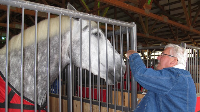 Jack with a Percheron