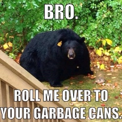 bearc
