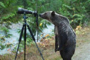 beare
